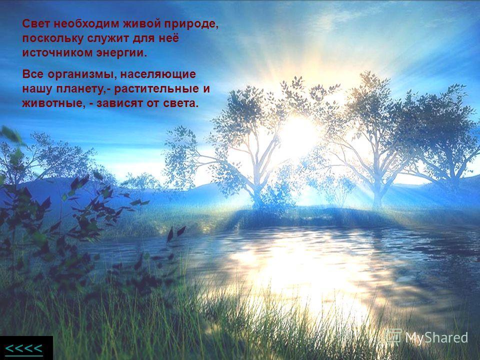 Свет необходим живой природе, поскольку служит для неё источником энергии. Все организмы, населяющие нашу планету,- растительные и животные, - зависят от света.