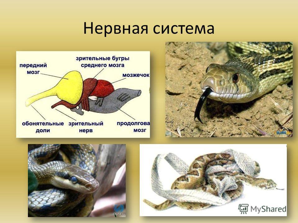 Органы животных системы органов определение примеры