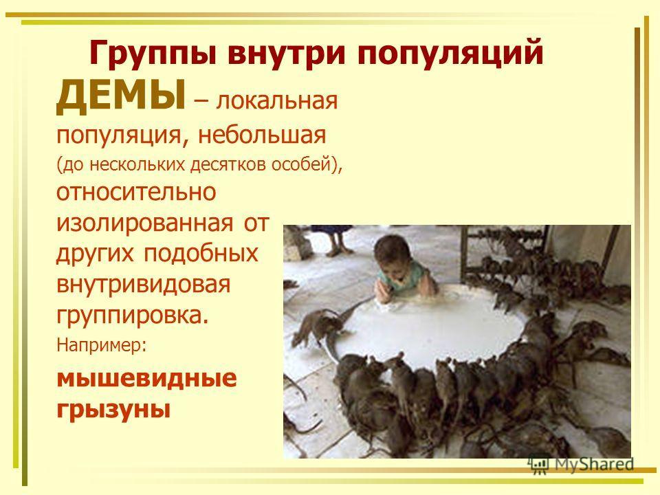 Группы внутри популяций ДЕМЫ – локальная популяция, небольшая (до нескольких десятков особей), относительно изолированная от других подобных внутривидовая группировка. Например: мышевидные грызуны