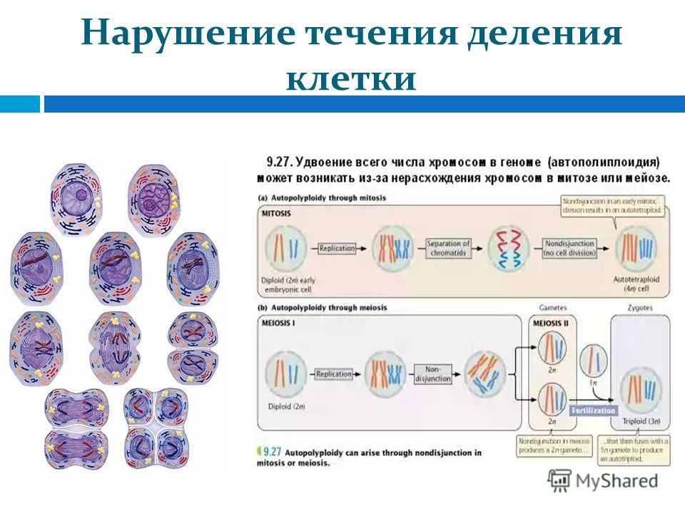 Нарушение течения деления клетки
