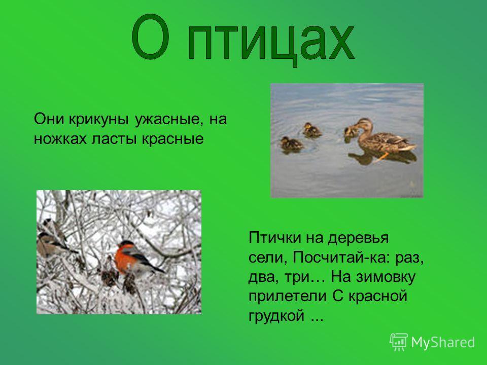 Они крикуны ужасные, на ножках ласты красные Птички на деревья сели, Посчитай-ка: раз, два, три… На зимовку прилетели С красной грудкой...