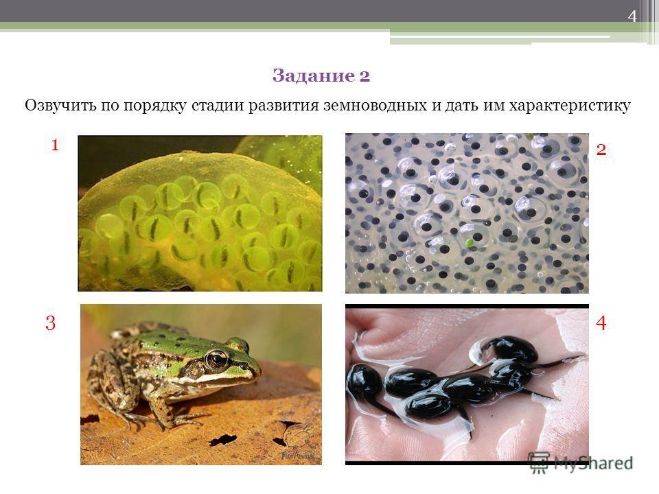 Задание 1 Рассказать о размножении земноводных по плану: 1.Сроки размножения 2.Половой диморфизм 3.Брачное поведение 4. Выметывание икры 5. Уход за потомством 3