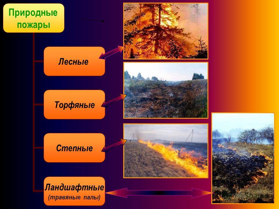 Природные пожары Лесные Торфяные Степные Ландшафтные (травяные палы)