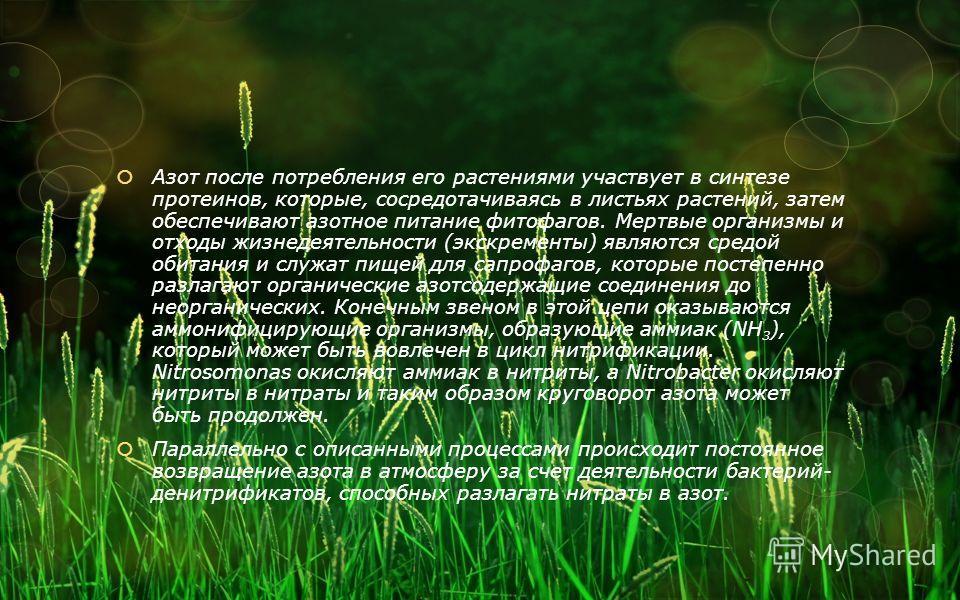 Азот после потребления его растениями участвует в синтезе протеинов, которые, сосредотачиваясь в листьях растений, затем обеспечивают азотное питание фитофагов. Мертвые организмы и отходы жизнедеятельности (экскременты) являются средой обитания и слу