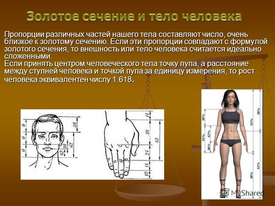 Пропорции различных частей нашего тела составляют число, очень близкое к золотому сечению. Если эти пропорции совпадают с формулой золотого сечения, то внешность или тело человека считается идеально сложенными. Если принять центром человеческого тела