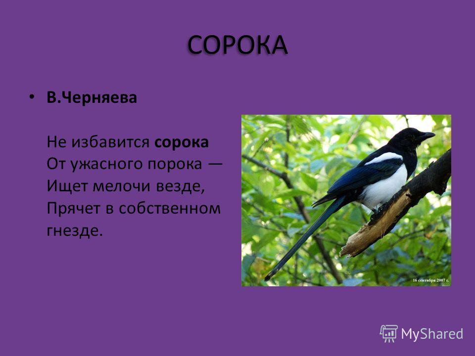СИНИЦА Л. Громова Шустрые синички, Птички-невелички, Прилетают в города На зиму, где есть еда. А весеннею порой Улетают в лес родной.