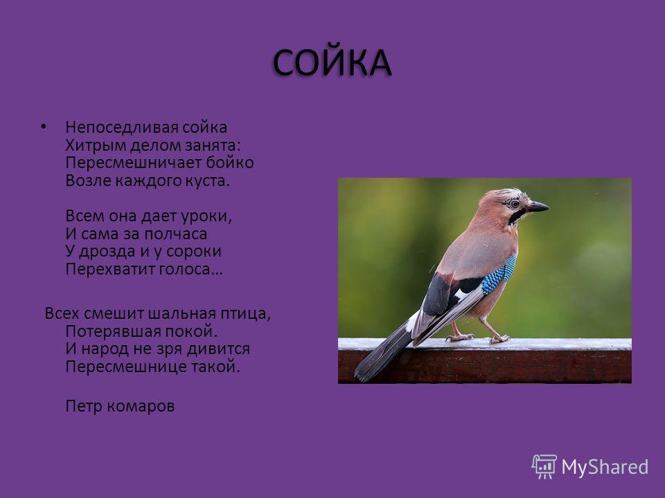 СКВОРЕЦ С. Газин Скворец поменьше, чем ворона, Зато побольше воробья - Он из скворечни как с балкона, Поёт не хуже соловья!