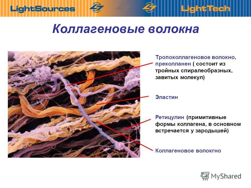 8 Коллагеновые волокна Тропоколлагеновое волокно, преколланен ( состоит из тройных спиралеобразных, завитых молекул) Эластин Ретицулин (примитивные формы коллагена, в основном встречается у зародышей) Коллагеновое волокгно