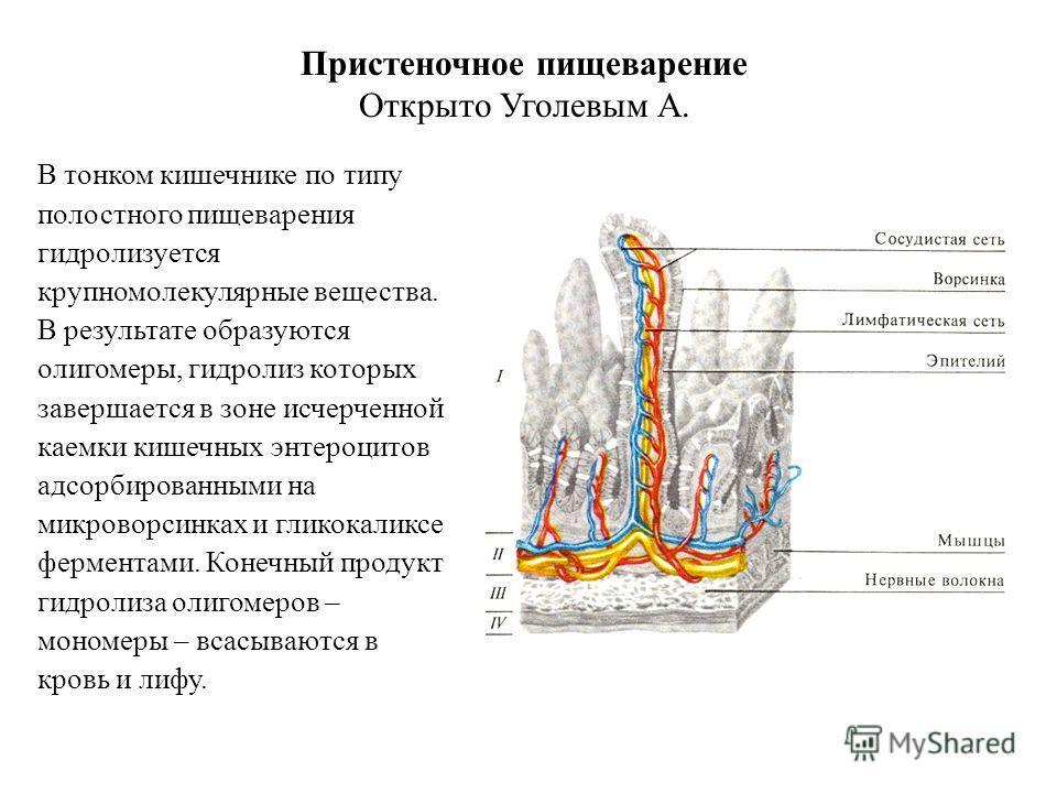 Энтеромегалия
