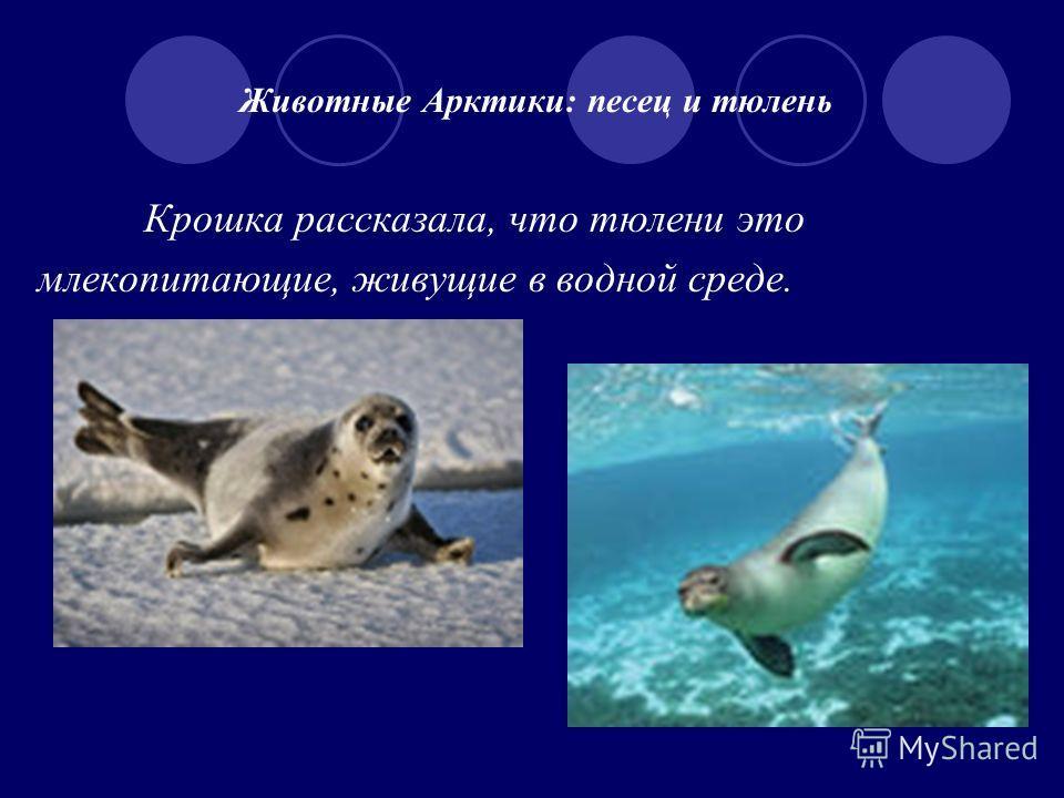 Животные Арктики: песец и тюлень Крошка рассказала, что тюлени это млекопитающие, живущие в водной среде.