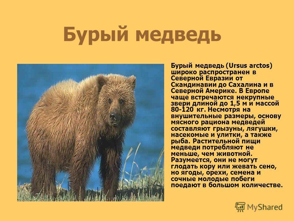 Длина тела современных медведей 110–300 см, высота в холке до 135 см, масса до 700 кг. Тело мощное, с высокой холкой. Шея толстая, обычно длинная, голова крупная, с удлиненным лицевым отделом, глаза небольшие, уши округлые. Клыки мощные, тогда как др