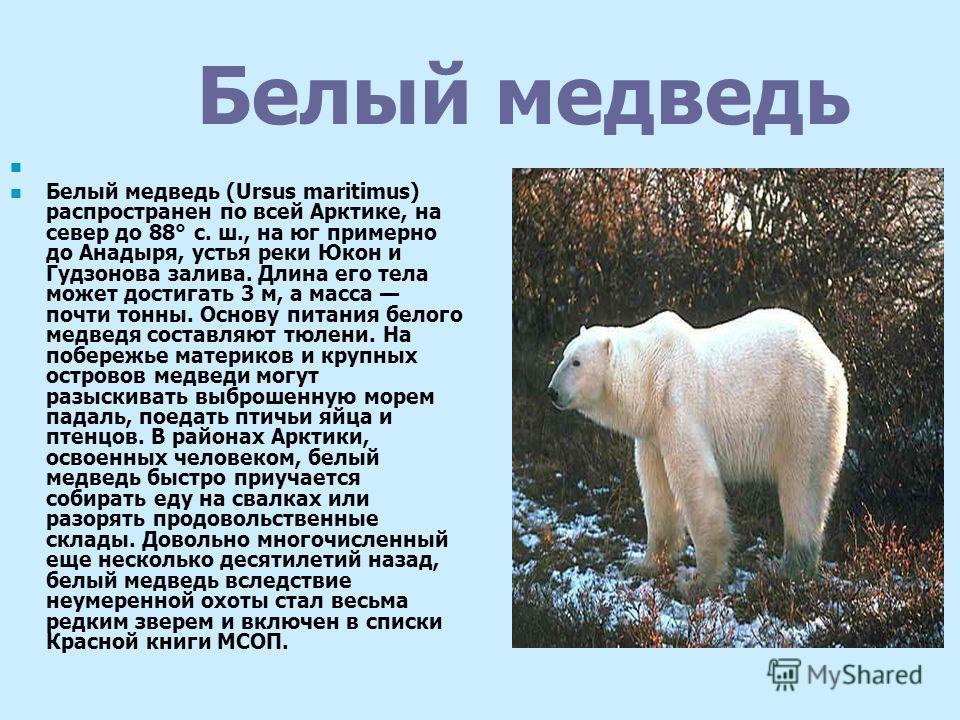 Бурый медведь Бурый медведь (Ursus arctos) широко распространен в Северной Евразии от Скандинавии до Сахалина и в Северной Америке. В Европе чаще встречаются некрупные звери длиной до 1,5 м и массой 80-120 кг. Несмотря на внушительные размеры, основу