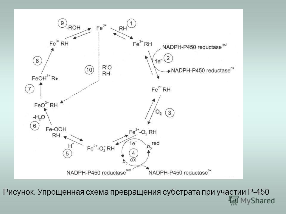 Рисунок. Упрощенная схема превращения субстрата при участии Р-450