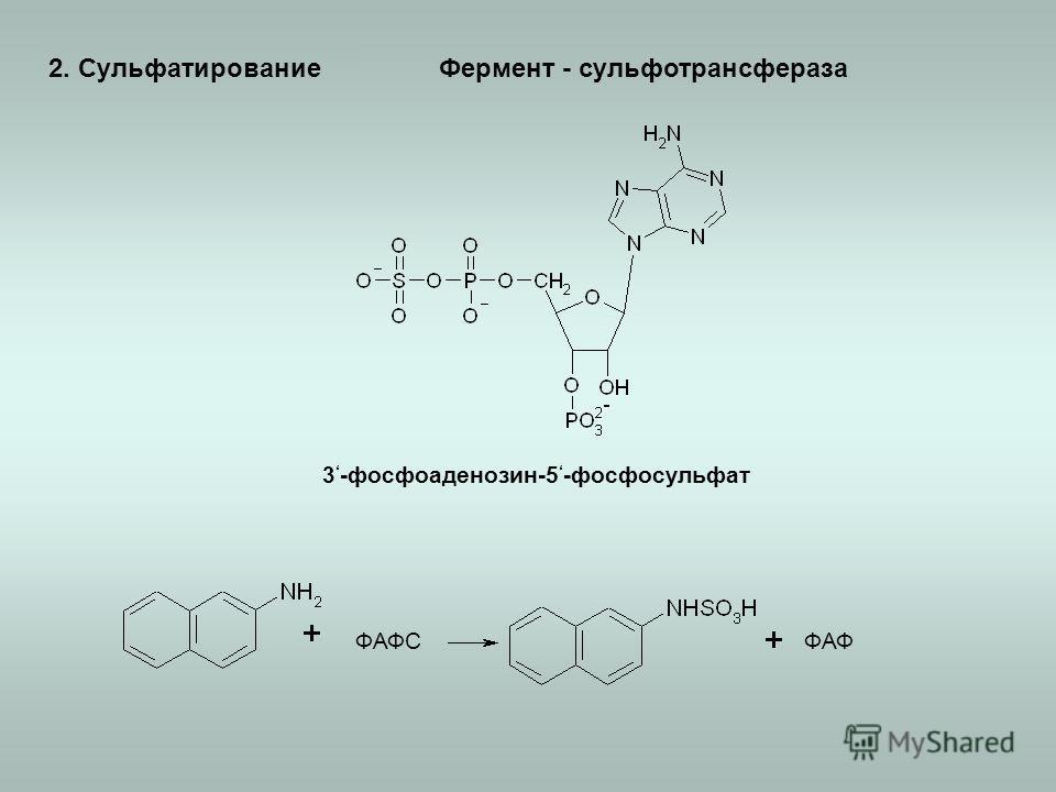 2. Сульфатирование 3 -фосфоаденозин-5 -фосфосульфат ФАФСФАФ Фермент - сульфотрансфераза