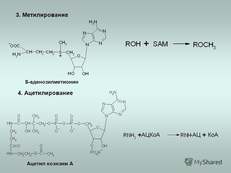 3. Метилирование 4. Ацетилирование S-аденозилметионин Ацетил коэнзим А КоААЦКоА-АЦ