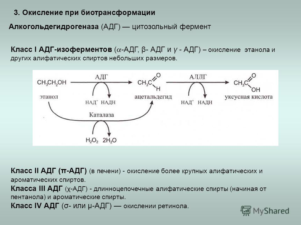 3. Окисление при биотрансформации Алкогольдегидрогеназа (АДГ) цитозольный фермент Класс I АДГ-изоферментов ( -АДГ, β- АДГ и γ - АДГ) – окисление этанола и других алифатических спиртов небольших размеров. Класс II АДГ (π-АДГ) (в печени) - окисление бо