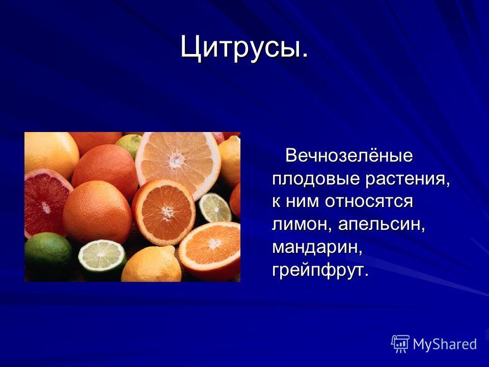 Цитрусы. Вечнозелёные плодовые растения, к ним относятся лимон, апельсин, мандарин, грейпфрут. Вечнозелёные плодовые растения, к ним относятся лимон, апельсин, мандарин, грейпфрут.