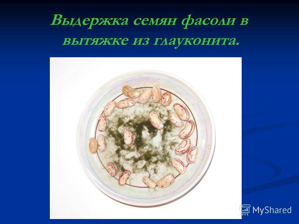 Выдержка семян фасоли в вытяжке из глауконита.