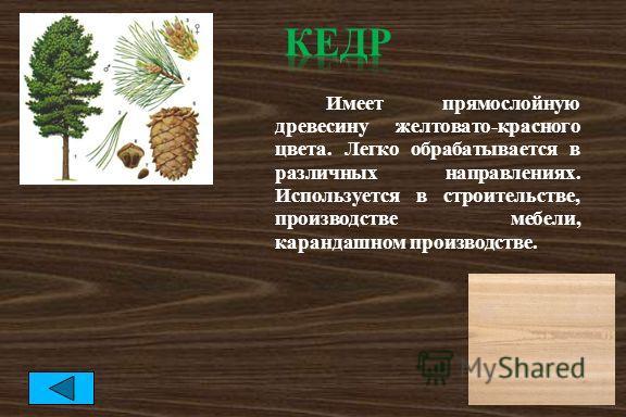 Имеет прямослойную древесину желтовато-красного цвета. Легко обрабатывается в различных направлениях. Используется в строительстве, производстве мебели, карандашном производстве.
