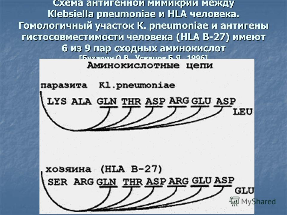 Схема антигенной мимикрии между Klebsiella pneumoniae и HLA человека. Гомологичный участок K. pneumoniae и антигены гистосовместимости человека (HLA B-27) имеют 6 из 9 пар сходных аминокислот [Бухарин О.В., Усвяцов Б.Я., 1996]
