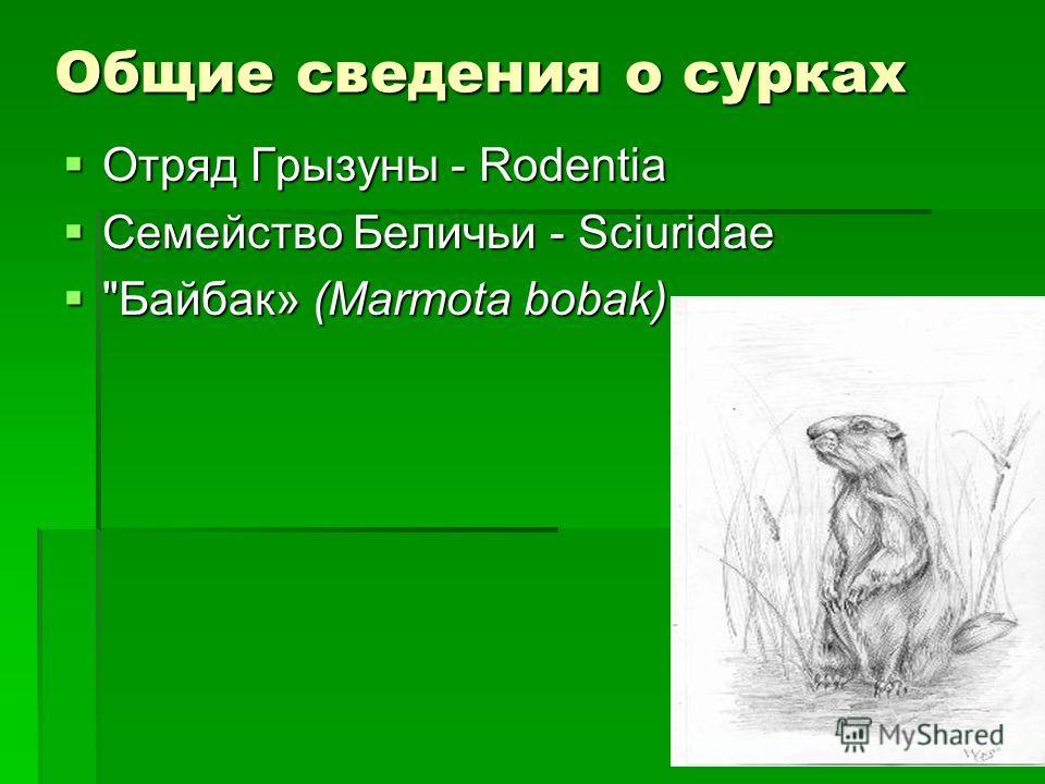 Общие сведения о сурках Отряд Грызуны - Rodentia Отряд Грызуны - Rodentia Семейство Беличьи - Sciuridae Семейство Беличьи - Sciuridae Байбак» (Marmota bobak) Байбак» (Marmota bobak)