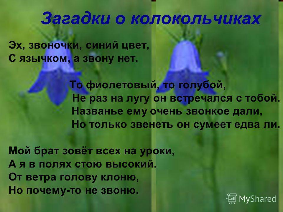 Загадки о колокольчиках Эх, звоночки, синий цвет, С язычком, а звону нет. То фиолетовый, то голубой, Не раз на лугу он встречался с тобой. Названье ему очень звонкое дали, Но только звенеть он сумеет едва ли. Мой брат зовёт всех на уроки, А я в полях
