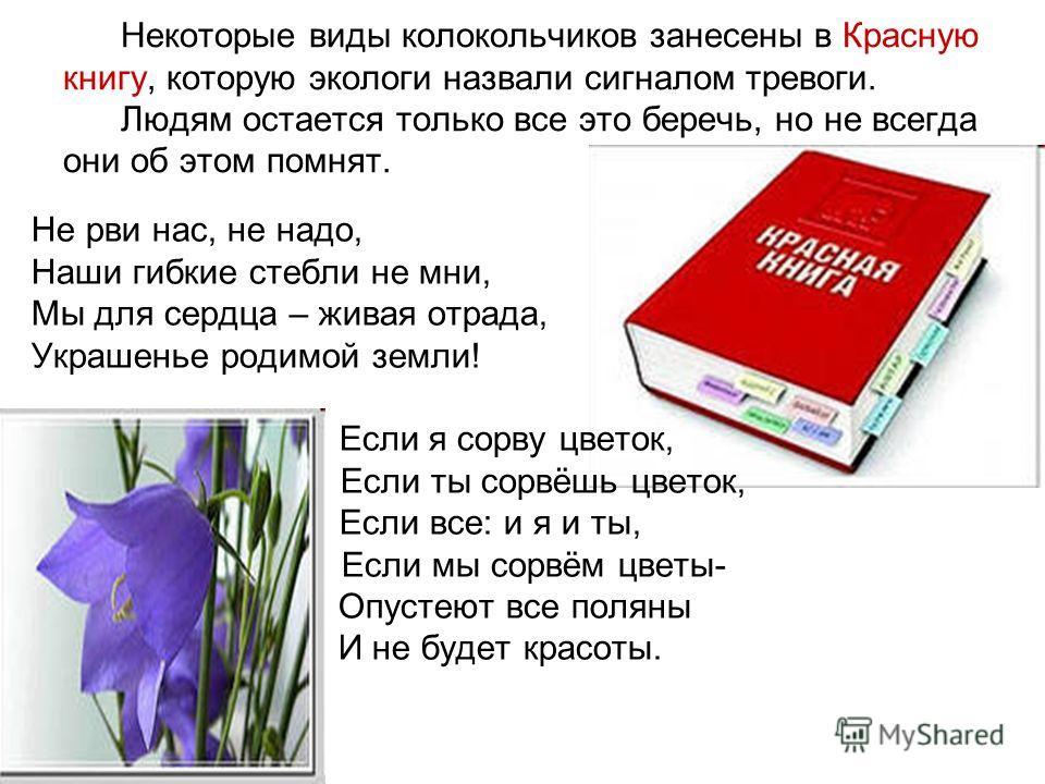 Некоторые виды колокольчиков занесены в Красную книгу, которую экологи назвали сигналом тревоги. Людям остается только все это беречь, но не всегда они об этом помнят. Не рви нас, не надо, Наши гибкие стебли не мни, Мы для сердца – живая отрада, Укра