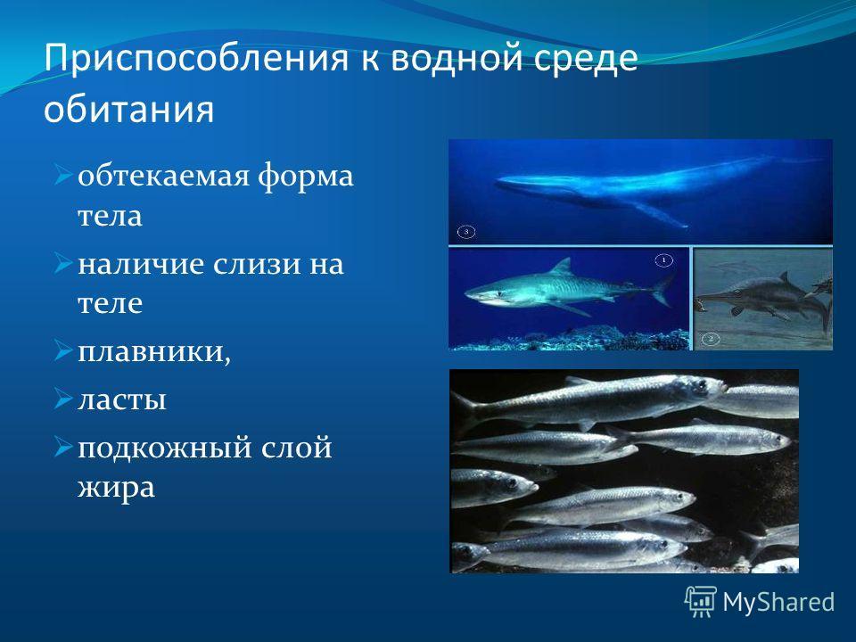 Приспособления к водной среде обитания обтекаемая форма тела наличие слизи на теле плавники, ласты подкожный слой жира