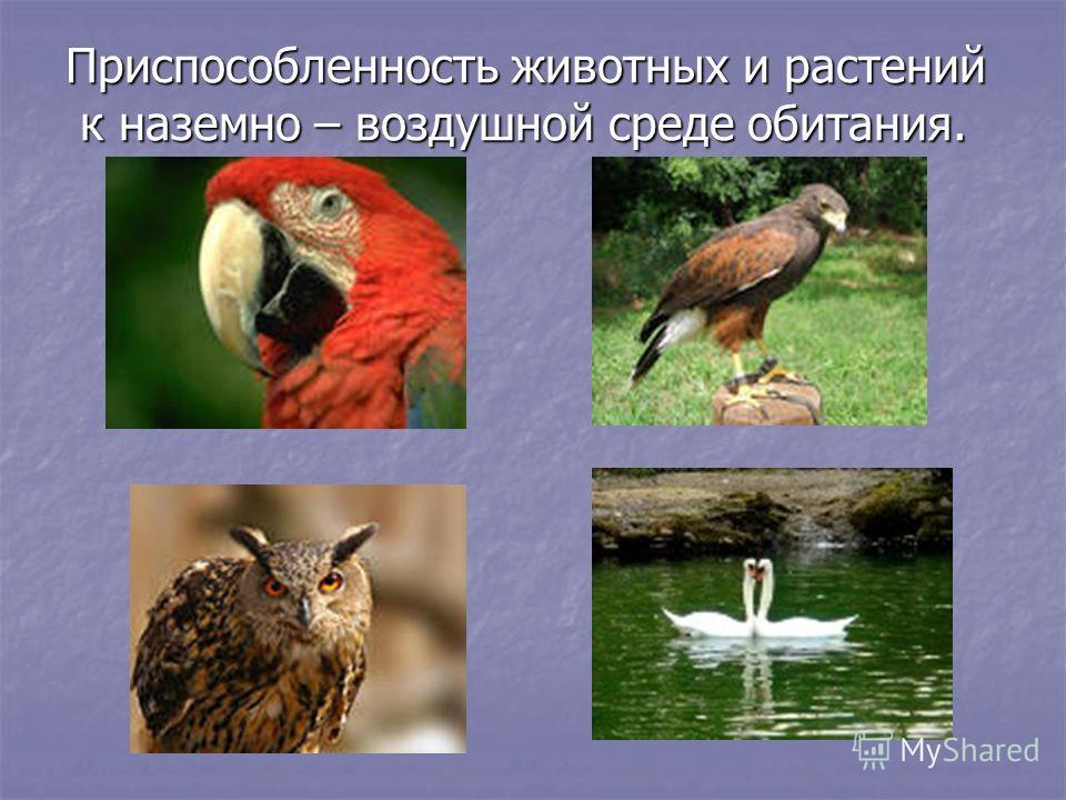Приспособленность животных и растений к наземно – воздушной среде обитания. к наземно – воздушной среде обитания.