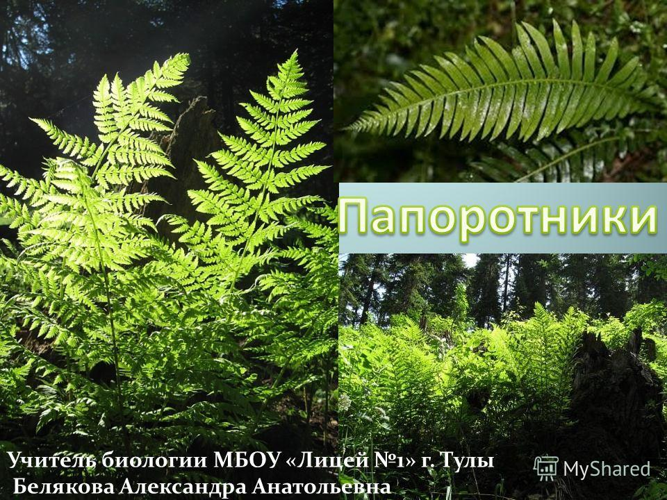 Учитель биологии МБОУ «Лицей 1» г. Тулы Белякова Александра Анатольевна