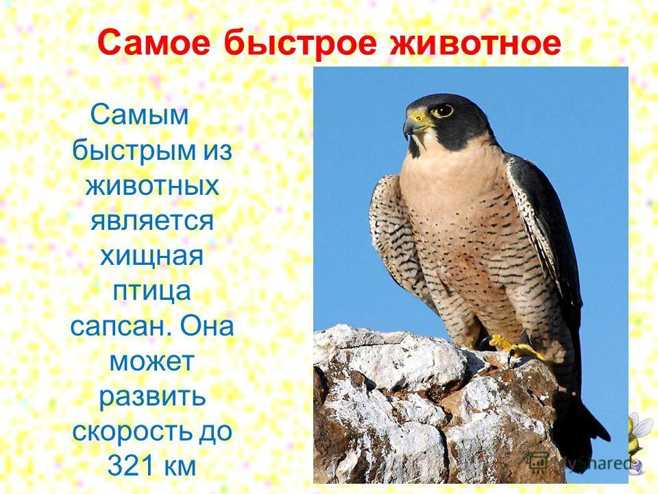Самое быстрое животное Самым быстрым из животных является хищная птица сапсан. Она может развить скорость до 321 км в час.