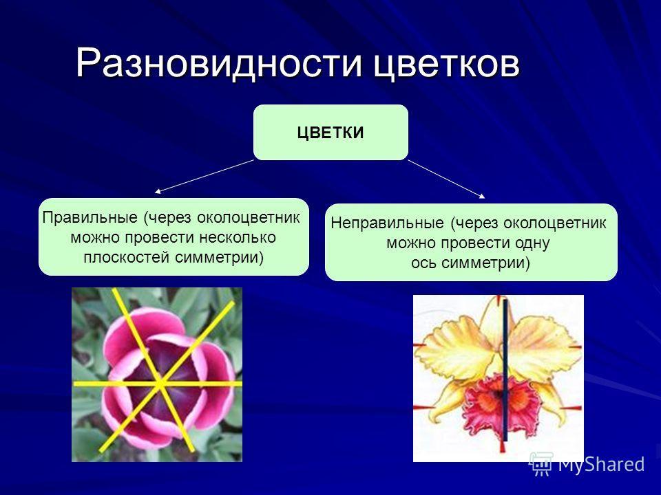 Разновидности цветков ЦВЕТКИ
