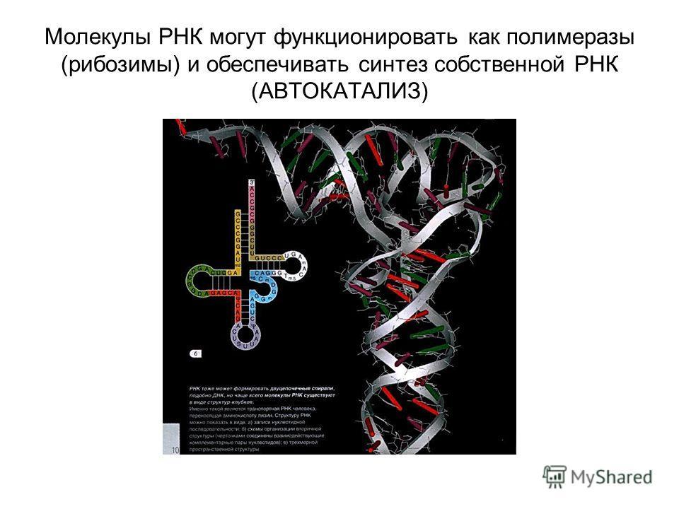 Молекулы РНК могут функционировать как полимеразы (рибозимы) и обеспечивать синтез собственной РНК (АВТОКАТАЛИЗ)