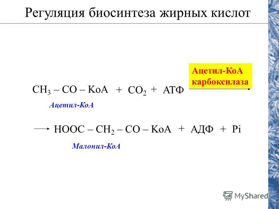 Регуляция биосинтеза жирных кислот CH 3 – CO – KoA CO 2 АТФ + + Ацетил-КоА карбоксилаза НООС – CH 2 – CO – KoAАДФ + +Pi Ацетил-КоА Малонил-КоА