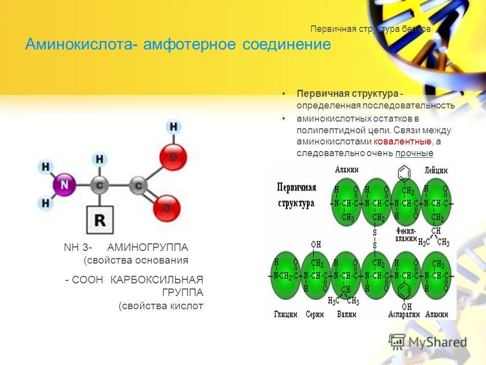 Аминокислота- амфотерное соединение Первичная структура - определенная последовательность аминокислотных остатков в полипептидной цепи. Связи между аминокислотами ковалентные, а следовательно очень прочные NH 3- АМИНОГРУППА (свойства основания - COOH