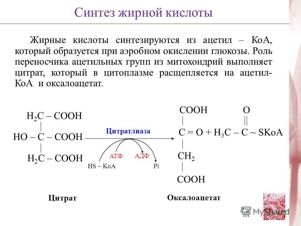 Жирные кислоты синтезируются из ацетил – КоА, который образуется при аэробном окислении глюкозы. Роль переносчика ацетильных групп из митохондрий выполняет цитрат, который в цитоплазме расщепляется на ацетил- КоА и оксалоацетат. Синтез жирной кислоты