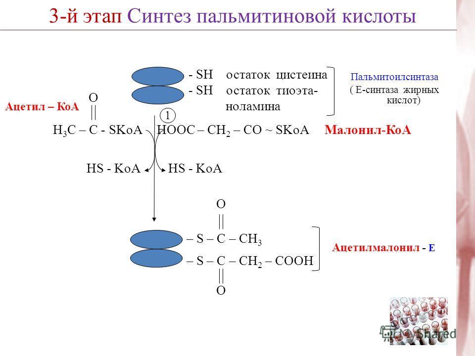 3-й этап Синтез пальмитиновой кислоты Пальмитоилсинтаза ( Е-синтаза жирных кислот) 1 HS - KoA HOOC – CH 2 – CО ~ SKoA Малонил-КоА HS - KoA O Н 3 С – С - SKoA Ацетил – КоА O – S – C – CH 3 – S – C – СН 2 – COOH O Ацетилмалонил - Е - SH остаток цистеин