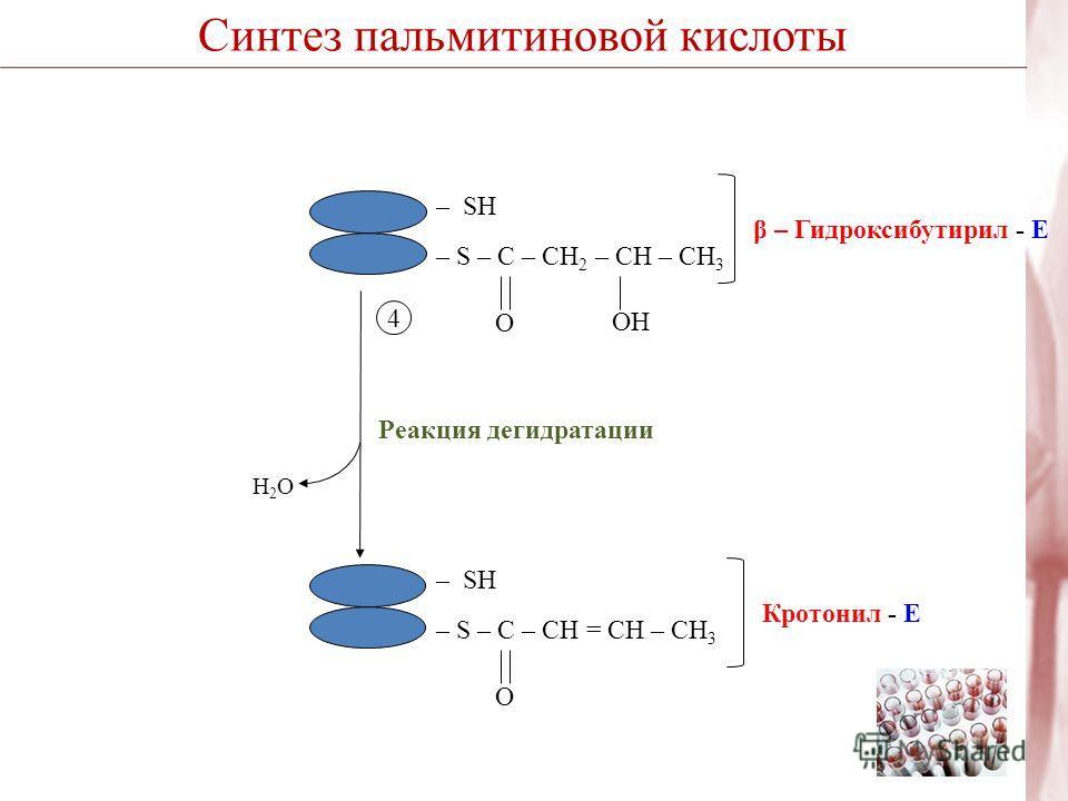 Синтез пальмитиновой кислоты H2OH2O Реакция дегидратации – SH – S – C – CH 2 – CН – CH 3 OНOН O β – Гидроксибутирил - Е – SH – S – C – CH = CН – CH 3 O Кротонил - Е 4