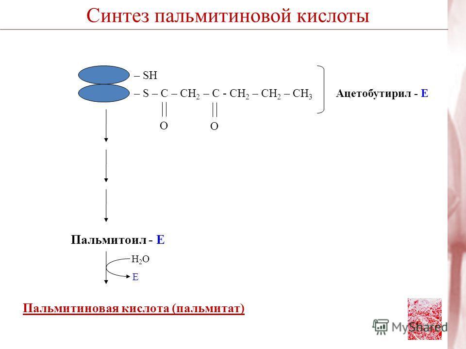 Пальмитиновая кислота (пальмитат) – S – C – СН 2 – С - CH 2 – CH 2 – CH 3 – SH O O Ацетобутирил - Е Пальмитоил - Е Н2ОН2О Е Синтез пальмитиновой кислоты