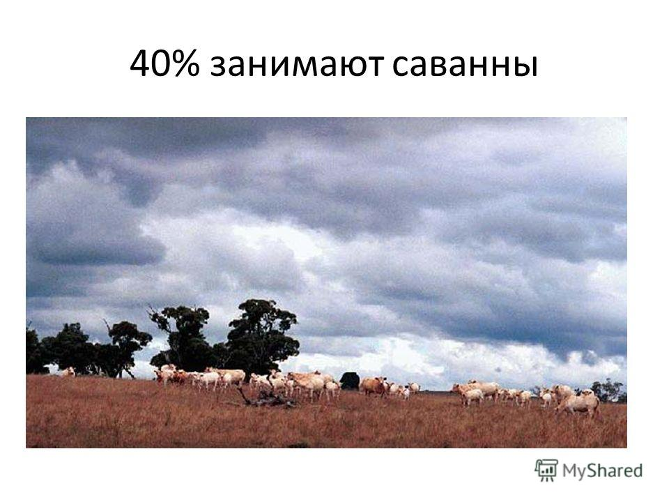 40% занимают саванны