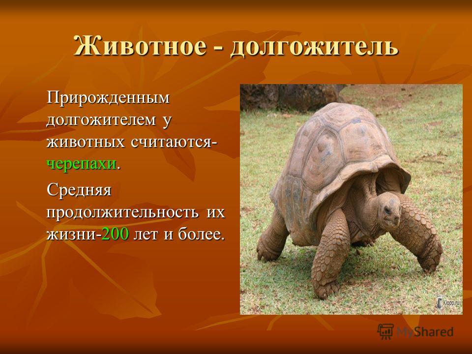 Животное - долгожитель Прирожденным долгожителем у животных считаются- черепахи. Прирожденным долгожителем у животных считаются- черепахи. Средняя продолжительность их жизни-200 лет и более. Средняя продолжительность их жизни-200 лет и более.
