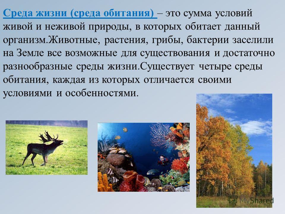 Среда жизни (среда обитания) – это сумма условий живой и неживой природы, в которых обитает данный организм.Животные, растения, грибы, бактерии заселили на Земле все возможные для существования и достаточно разнообразные среды жизни.Существует четыре