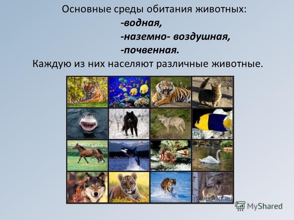 Основные среды обитания животных: -водная, -наземно- воздушная, -почвенная. Каждую из них населяют различные животные.