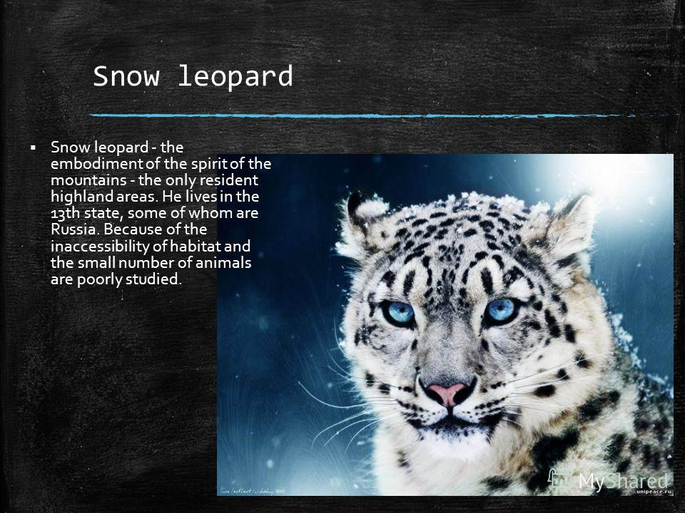 Snow leopard Snow leopard - the embodiment of the spirit of the mountains - the only resident highland areas. He lives in the 13th state, some of whom are Russia. Because of the inaccessibility of habitat and the small number of animals are poorly st