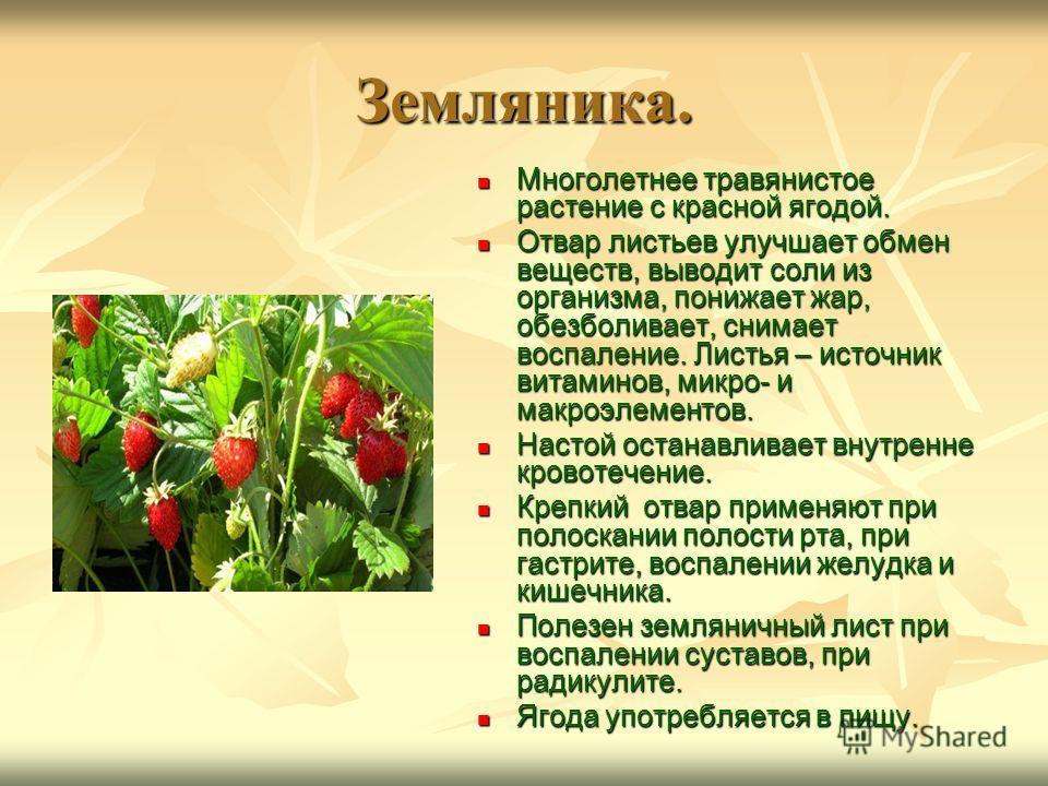Земляника. Многолетнее травянистое растение с красной ягодой. Многолетнее травянистое растение с красной ягодой. Отвар листьев улучшает обмен веществ, выводит соли из организма, понижает жар, обезболивает, снимает воспаление. Листья – источник витами