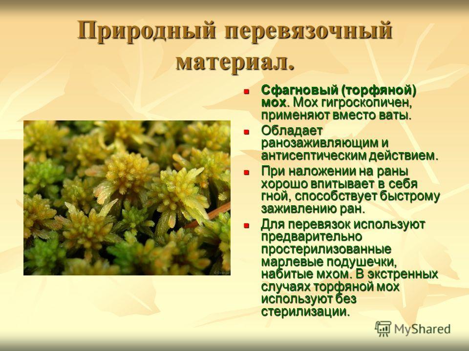 Природный перевязочный материал. Сфагновый (торфяной) мох. Мох гигроскопичен, применяют вместо ваты. Сфагновый (торфяной) мох. Мох гигроскопичен, применяют вместо ваты. Обладает ранозаживляющим и антисептическим действием. Обладает ранозаживляющим и