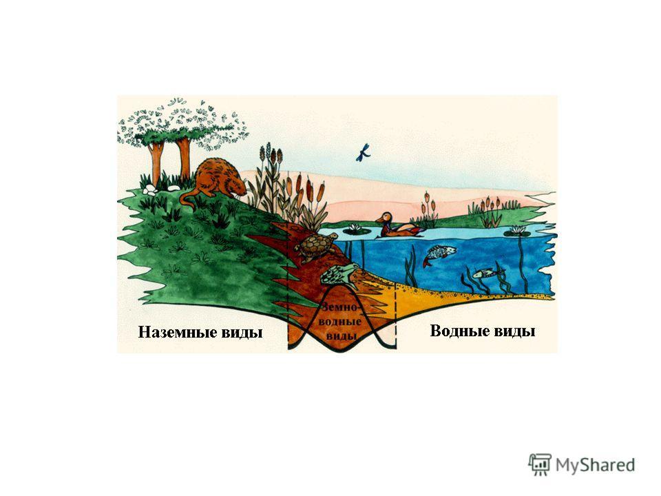 Сценарий охрана экологии