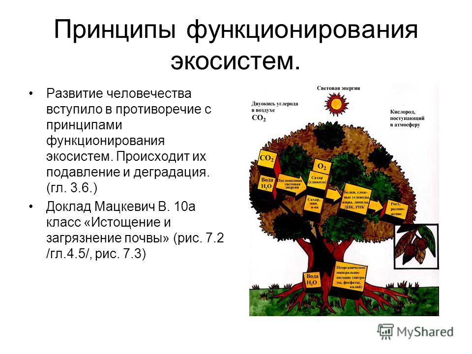 Принципы функционирования экосистем. Развитие человечества вступило в противоречие с принципами функционирования экосистем. Происходит их подавление и деградация. (гл. 3.6.) Доклад Мацкевич В. 10а класс «Истощение и загрязнение почвы» (рис. 7.2 /гл.4