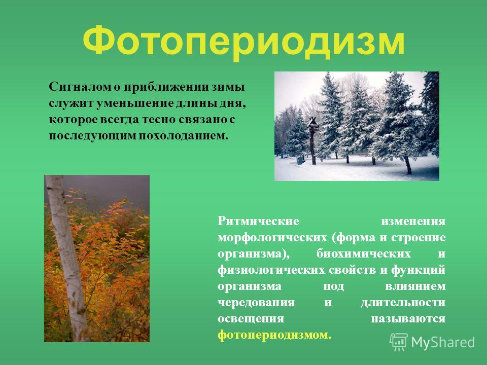 Фотопериодизм Сигналом о приближении зимы служит уменьшение длины дня, которое всегда тесно связано с последующим похолоданием. Ритмические изменения морфологических (форма и строение организма), биохимических и физиологических свойств и функций орга