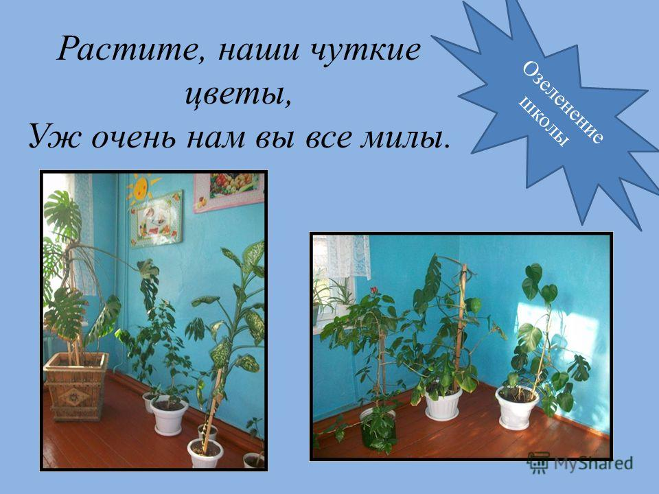Растите, наши чуткие цветы, Уж очень нам вы все милы. Озеленение школы